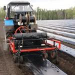 Примерная технология выращивания клубники с рассадой фриго