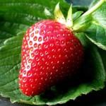 Земляника садовая (или крупноплодная) делится на три вида
