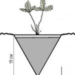Подготовка почвы для земляники